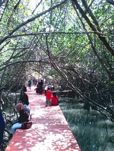 Hutan Mangrove Rembang Jawa Tengah