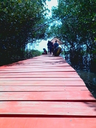 Jembatan Merah Taman Mangrove Rembang, Jawa Tengah