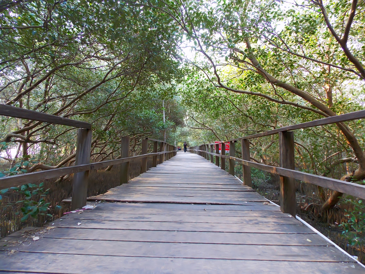 Taman Mangrove Morosari Demak, Jawa tengah