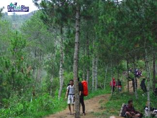 Hutan Pinus Gunung Andong